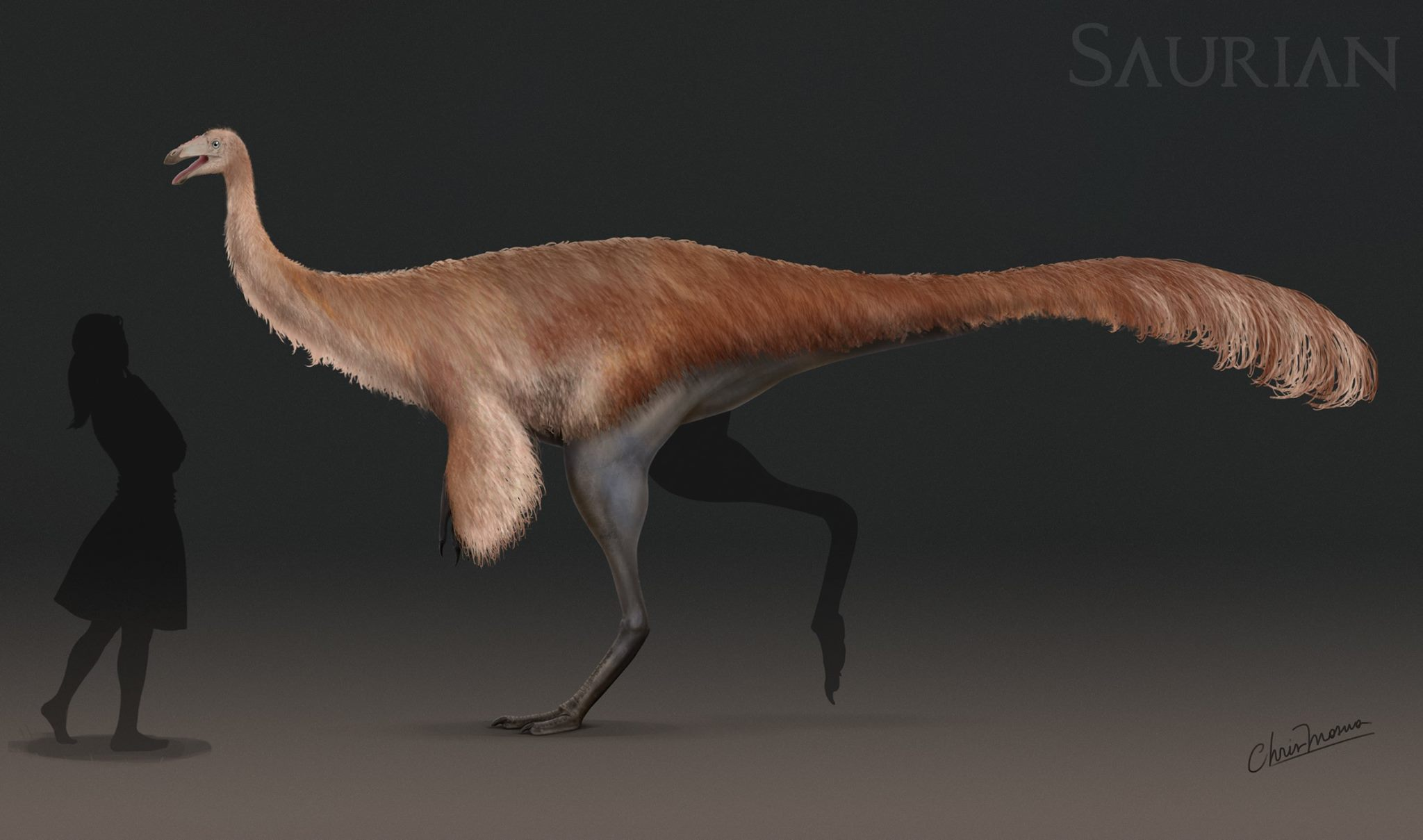 Ornithomimid-Konzept in Saurian
