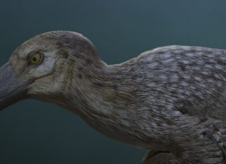 Saurian Dakota Raptor Render Urvogel Games